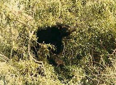 Pilgrim killed in bear attack at Yala National Park