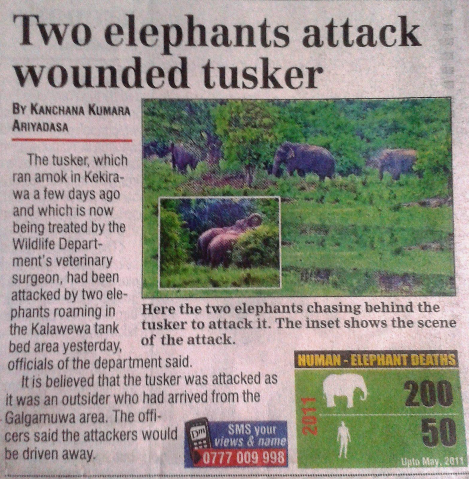 Fighting Elephants – Unusual behaviour