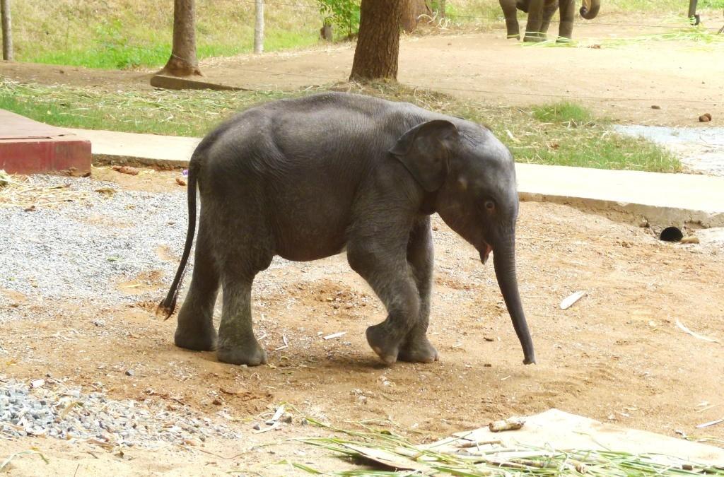 Elephant Transit Home Udawalave