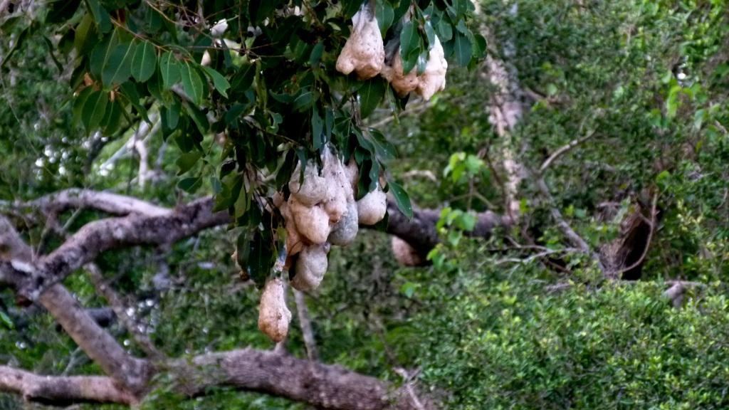 tree frog eggs