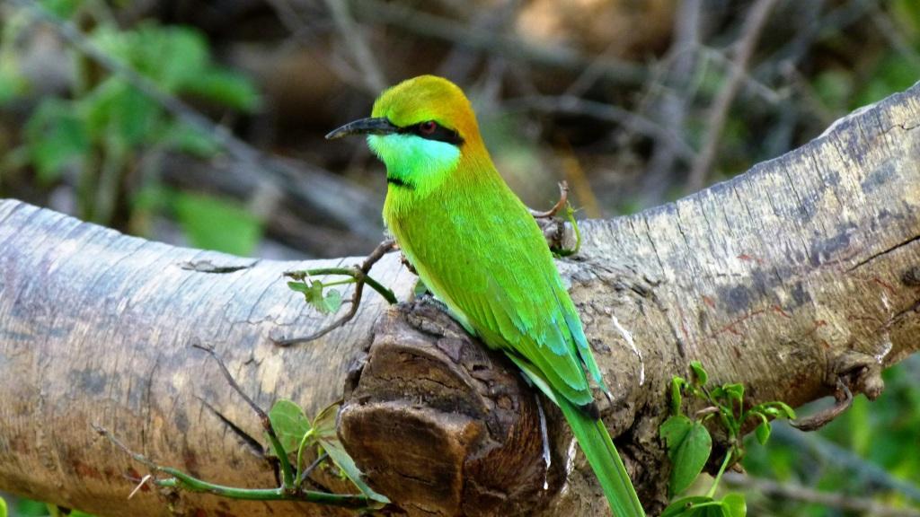 Birds of the Uda Walawe National Park