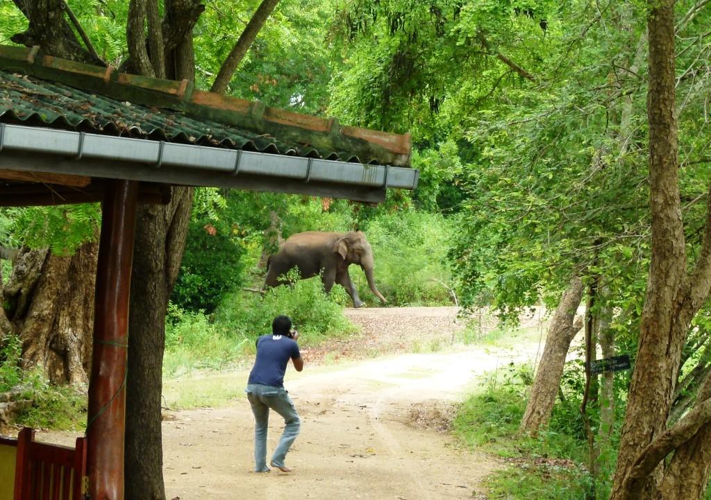 A Close Encounter At Uda Walawe National Park- 2nd/3rd June 2014