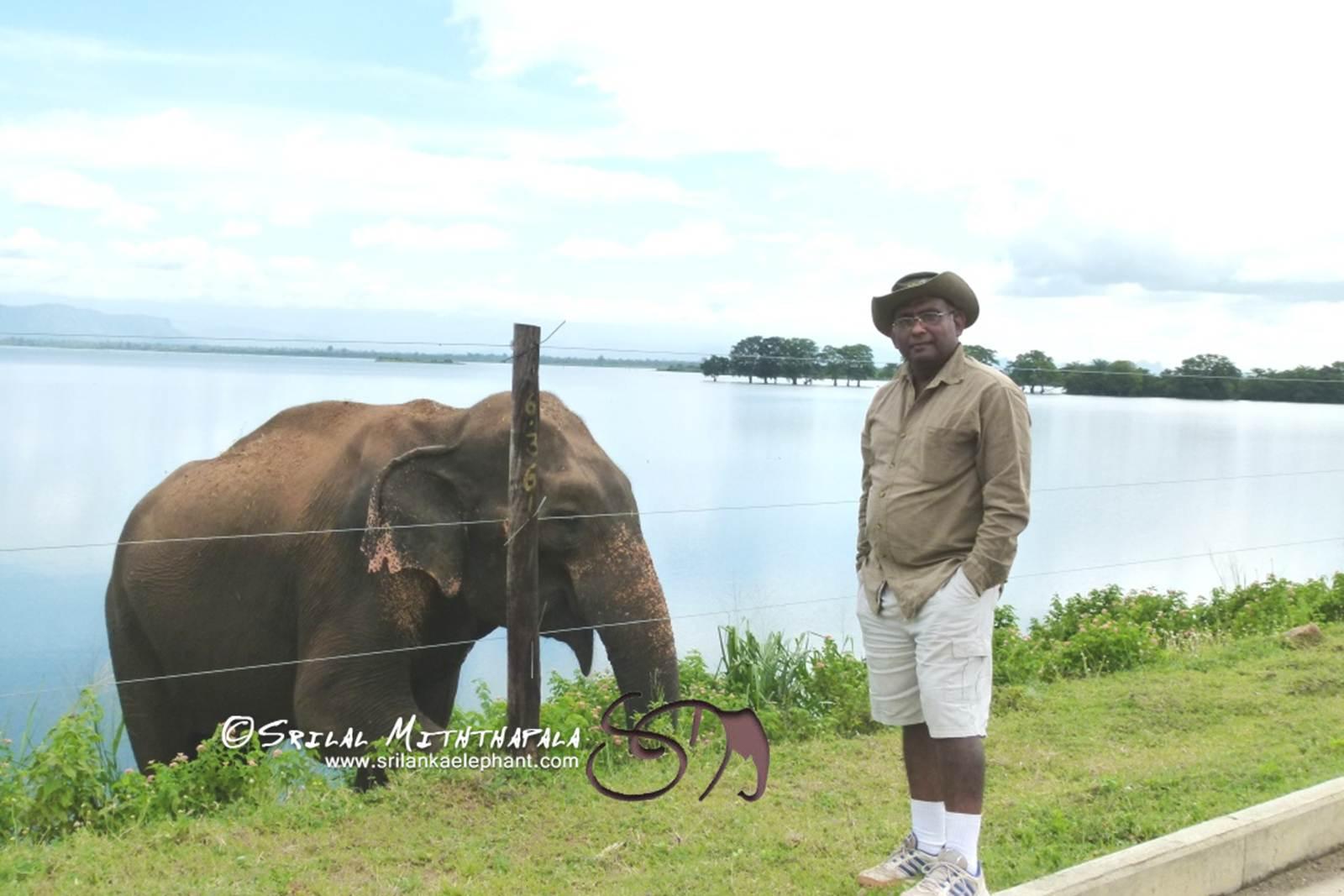Off Season for Rambo, the Uda Walawe Elephant?